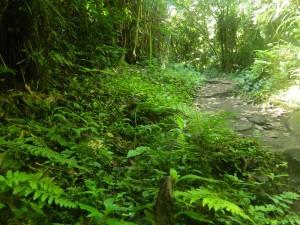 A Dense Jungle