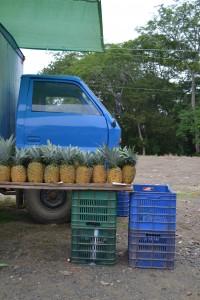 Farmers Market in Jaco