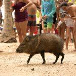 Animals of Costa Rica